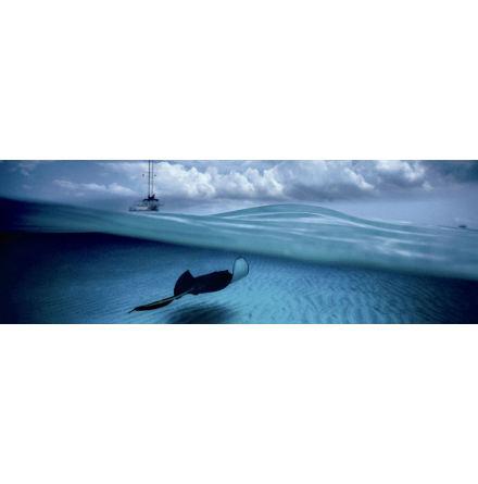 AvH: Stingray (1000 pieces panorama)